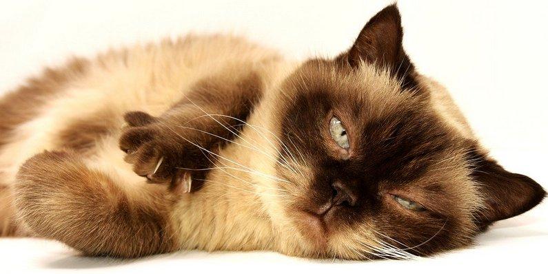Je přejedená kočka spokojená nebo motivovaná?